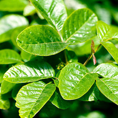 Getting Rid of Poison Oak Around My Home